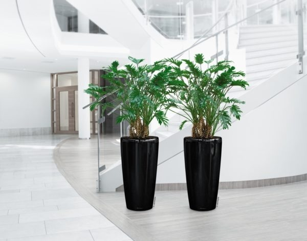 A_RD40_2_sw_Philodendron