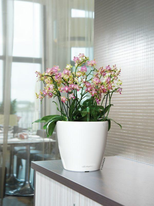 A_D35_LS_w_Orchidee