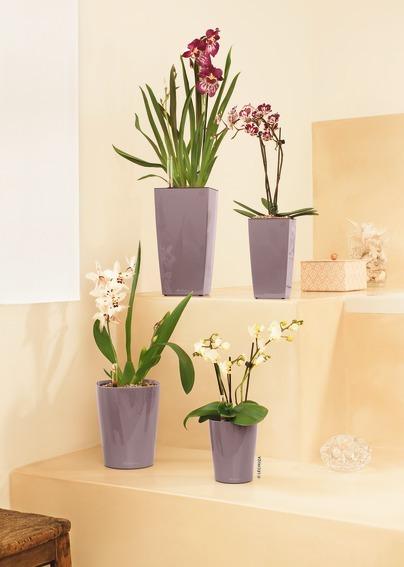 A_MiniDLT_DLT_MiniQ_MaxiQ_quail_Orchideen