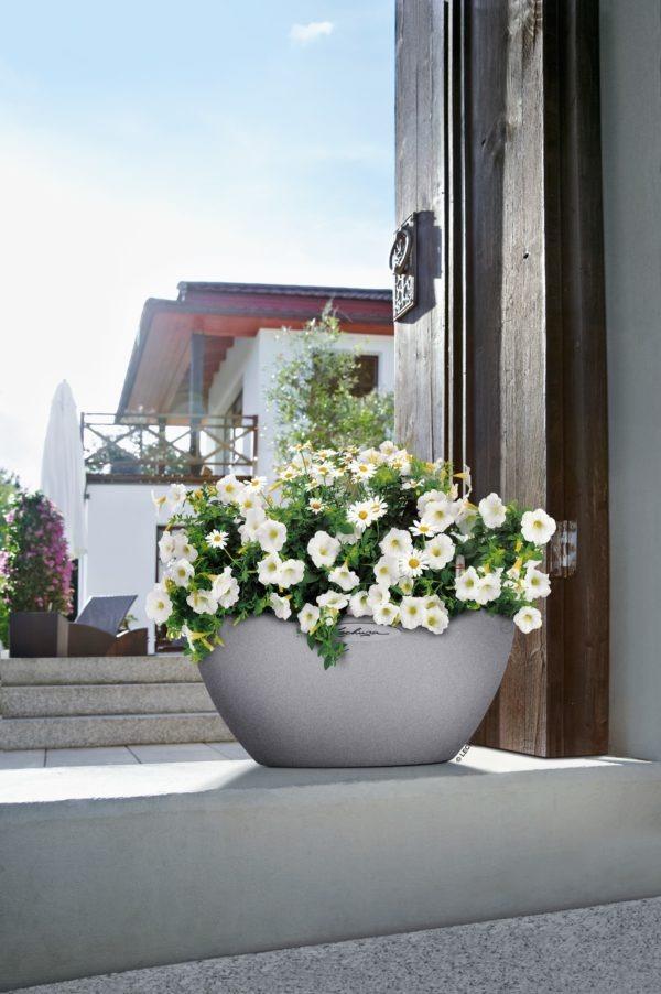 A_CUBETO_30_stg_Chrysanthemum